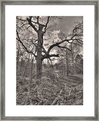 Spirit Tree Framed Print by William Fields