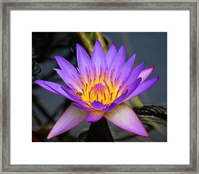 Spiritaul Violet Lily Framed Print by Vijay Sharon Govender