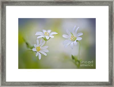Spirits Of Spring Framed Print by Jacky Parker