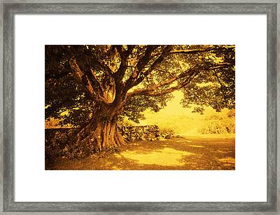 Spiritual Place. Wicklow Mountains. Ireland Framed Print by Jenny Rainbow