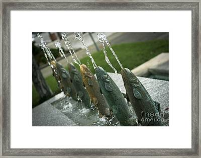 Spitting Fish Framed Print by David Taylor