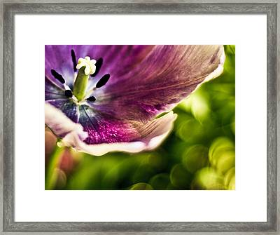 Splash Framed Print by Jason Naudi Photography