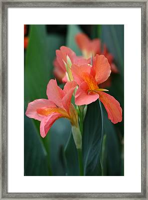 Splash Of Orange Framed Print by Paul Slebodnick