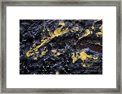 Splash Framed Print by Tina Damster