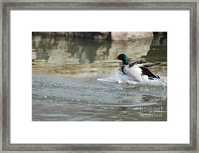 Framed Print featuring the photograph Splashdown by Mark McReynolds