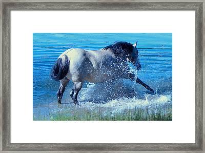 Splashing Horse Framed Print by FeVa  Fotos