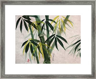 Splendid Bamboo Framed Print by Alethea McKee
