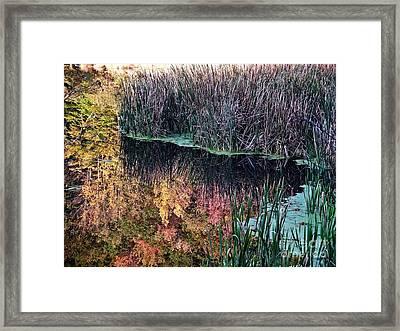Splendor In The Grass Framed Print by Christian Mattison