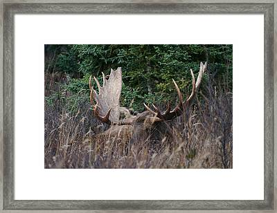 Framed Print featuring the photograph Splendor In The Grass by Doug Lloyd