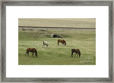 Splendor Of Horses Framed Print by Yumi Johnson
