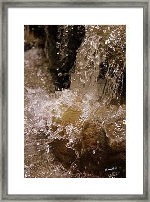 Splish Splash Framed Print by Ed Smith