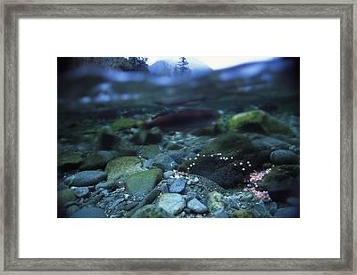 Split Level View Of Underwater Framed Print by Joel Sartore