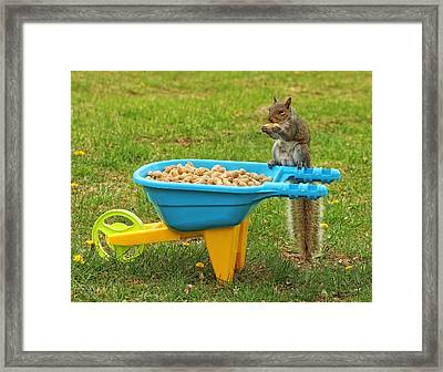 Spoiled Squirrel Framed Print