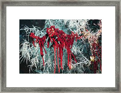 Sponge On Coral Framed Print by Georgette Douwma
