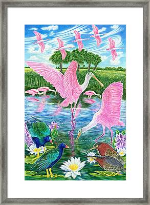 Spoonbill Heaven Framed Print by Tim McCarthy