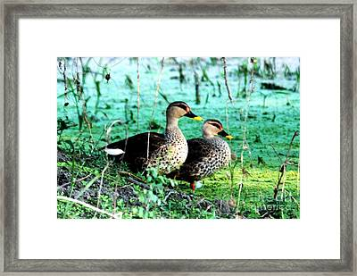 Framed Print featuring the photograph Spot Bill Ducks by Pravine Chester