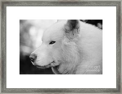 Spot In Black And White Framed Print by Lynda Dawson-Youngclaus