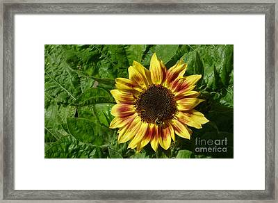Framed Print featuring the photograph Spot The Bee by Jim Sauchyn