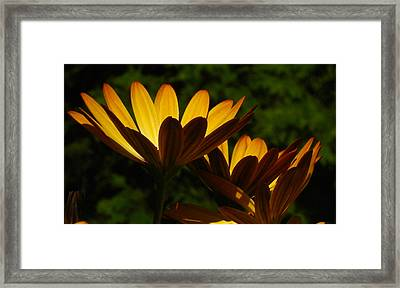 Spotlight On Ganzia Framed Print