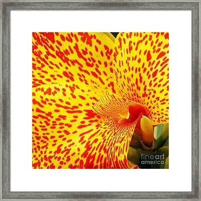 Spotted And Textured Square Wall Art Framed Print by Kaye Menner