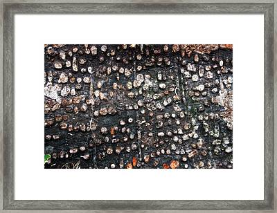 Spotted Bark Framed Print by Jennifer Bright