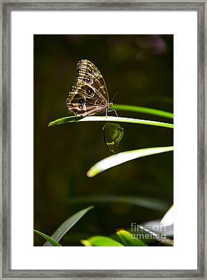 Spotted Beauty Framed Print by Leslie Leda