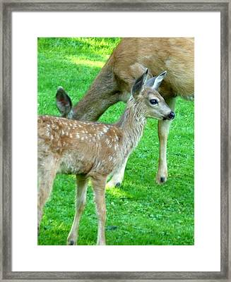 Framed Print featuring the photograph Spotted Fawn And Doe by Cindy Wright