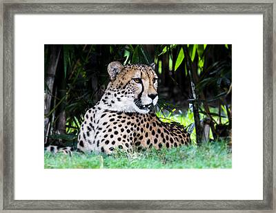 Spotted Framed Print by Nicholas Evans