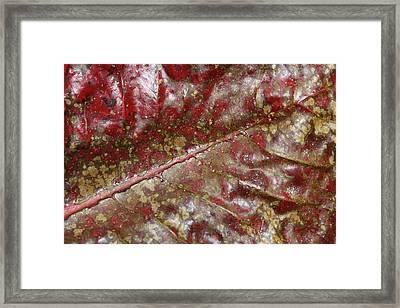 Spotted Red Leaf Framed Print