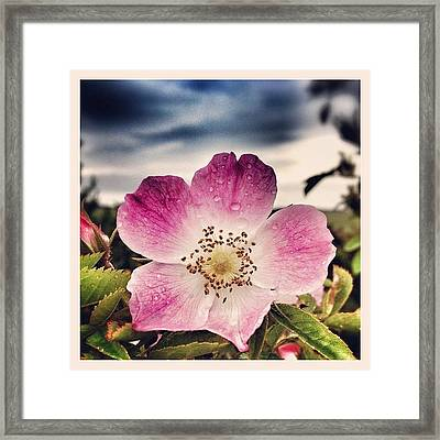 Spotted This On My Morning Walk! Don't Framed Print