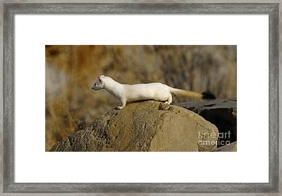Spotting The Prey Framed Print by Dennis Hammer