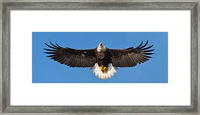 Framed Print featuring the photograph Spread Eagle by Randall Branham