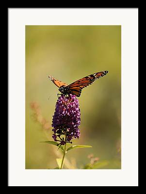 Spread Your Wings And Fly Framed Prints