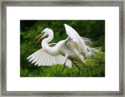 Spreading His Wings Framed Print by Paulette Thomas