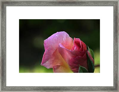 Spreading Petals Framed Print