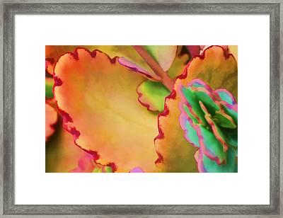 Spring 2 Framed Print by Dawn Nicoli