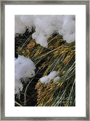Spring Arrives Framed Print