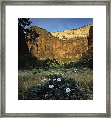 Spring At Big Bend Framed Print