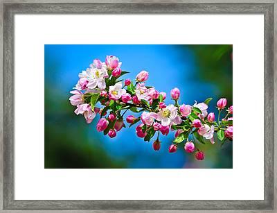 Spring Awakening Framed Print by Greg Norrell