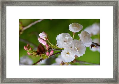 Framed Print featuring the photograph Spring Beauty by Rima Biswas