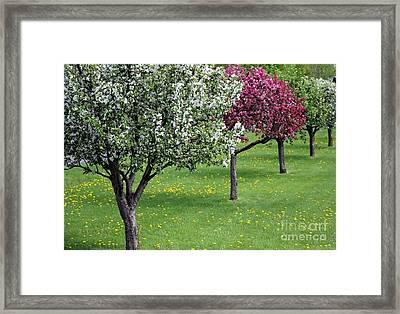 Spring Beauty Framed Print by Sophie Vigneault