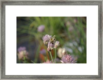 Framed Print featuring the photograph Spring Bee by Serene Maisey