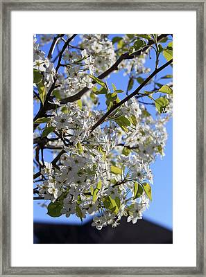 Framed Print featuring the photograph Spring Blooms by Kay Novy