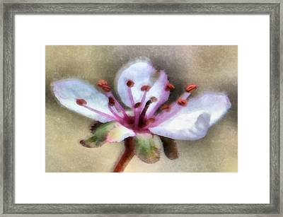 Spring Blossoms 1 Framed Print by Angelina Vick