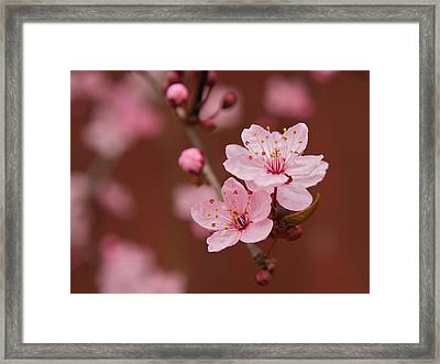 Spring Blossoms Framed Print by Bob Smithing