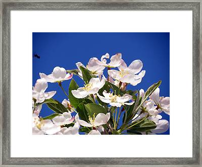 Framed Print featuring the photograph Spring Blossoms by Darleen Stry