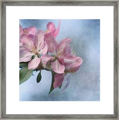 Spring Blossoms For The Cure Framed Print by Kim Hojnacki
