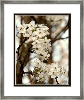 Spring Blossoms Framed Print by Megan Wilson