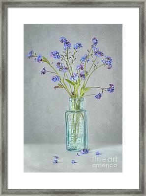 Spring Blues Framed Print by Jacky Parker