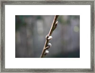 Spring Bokeh Framed Print